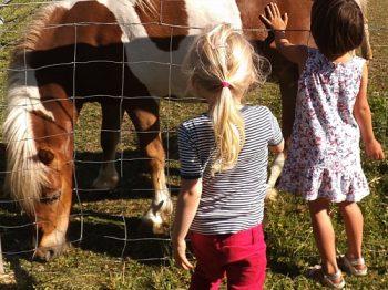 Freie evangelische Gemeinde Wuppertal Barmen - Ausflug Kinder Streichelgehege